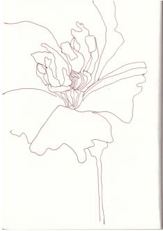 Hibiskus (c) Zeichnung von Susanne Haun