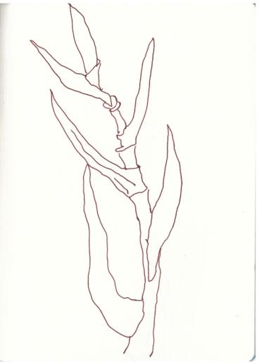 Balkonblumen (c) Zeichnung von Suanne HaunBalkonblumen (c) Zeichnung von Suanne Haun