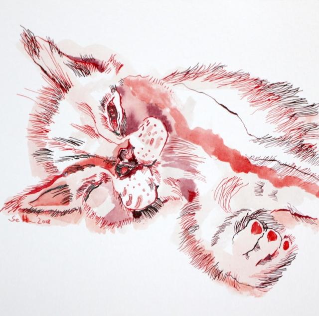 Karthäuser Oscar - 30 x 30 cm - Tusche auf Aquarellkarton (c) Zeichnung von Susanne Haun