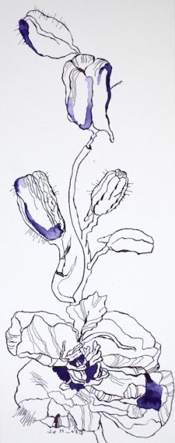 Rittersporn - 50 x 20 cm - Tusche auf Hahnemühle Burgund (c) Zeichnung von Susanne Haun