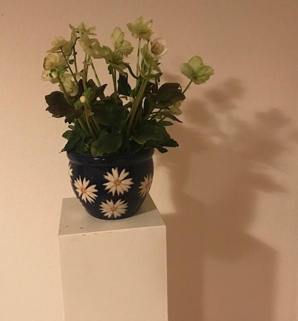 Christrose - Foto von Susanne Haun (c) VG Bild Kunst 2018