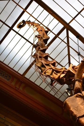 1 Museum für Naturkunde, Foto von M.Fanke