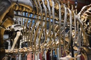3 Museum für Naturkunde, Foto von M.Fanke