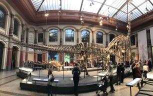 Museum für Naturkunde, Foto von Susanne Haun