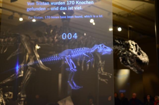 Tristan, Museum für Naturkunde, Foto von M.Fanke