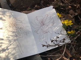 Anemonen, Zeichnung von Susanne Haun (c) VG Bild-Kunst, Bonn 2019