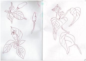 Afrika 4. Skizzenbuch Viktoriafälle, Zeichnung von Susanne Haun (c) VG Bild-Kunst, Bonn 2019