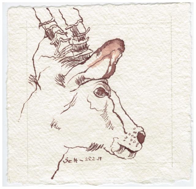Impala Antilope, 15 x 15 cm, Tusche auf Silberburg Büttenpapier, Zeichnung von Susanne Haun (c) VG Bild-Kunst, Bonn 2019