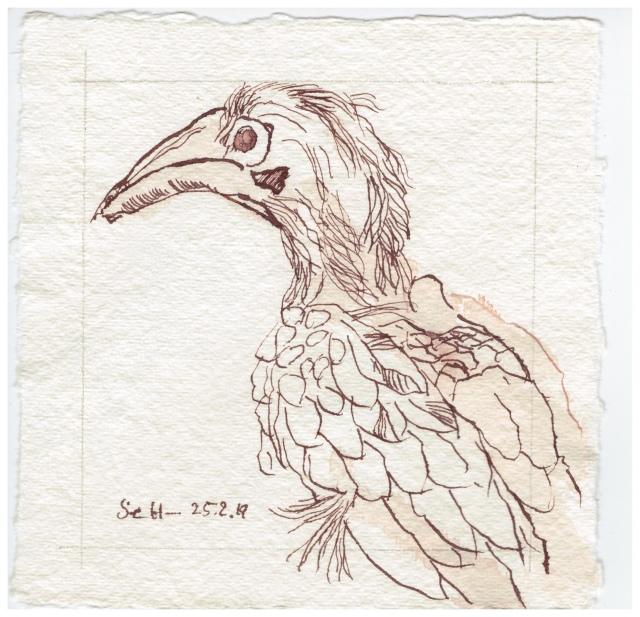 Vogel aus Afrika, Chobe, 15 x 15 cm, Tusche auf Silberburg Büttenpapier, Zeichnung von Susanne Haun (c) VG Bild-Kunst, Bonn 2019