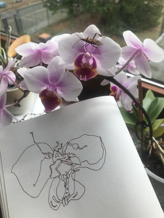 1 Mamas Orchideen Im Wintergarten Zeichnung Und Foto Von