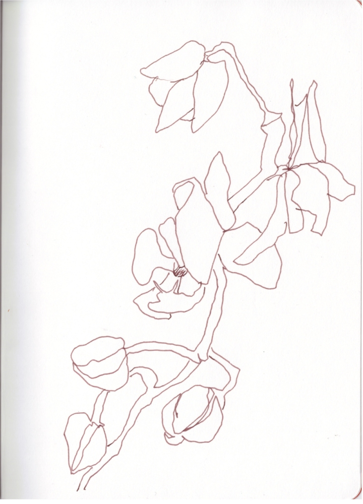 Skizzenbuch, Mamas Orchideen, Zeichnung von Susanne Haun (c) VG Bild-Kunst, Bonn 2019
