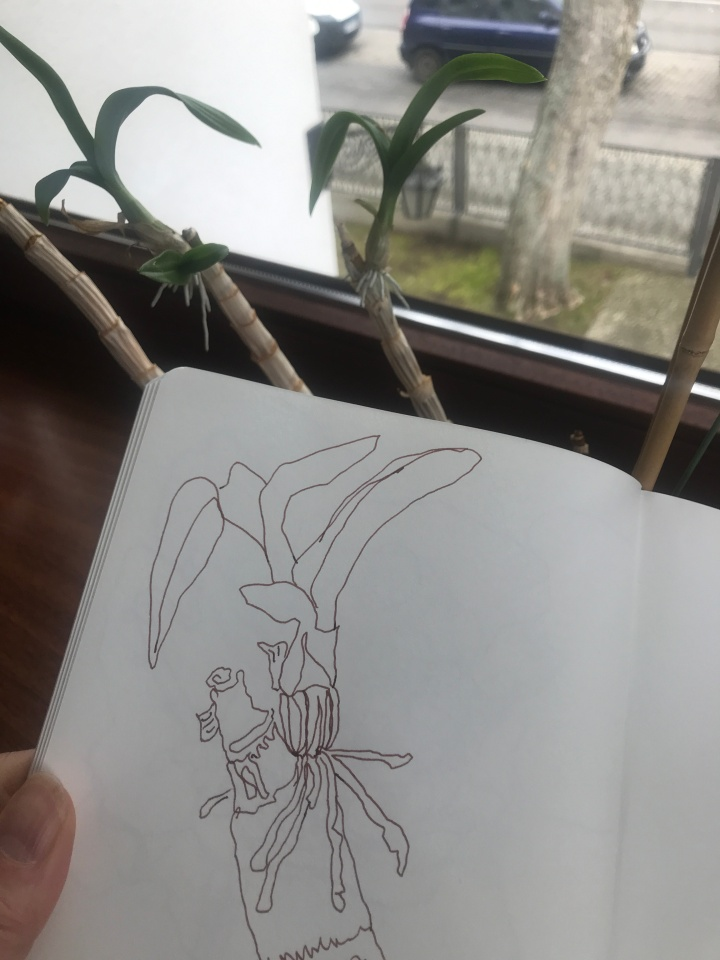 Mamas Orchideen im Wintergarten, Zeichnung und Foto von Susanne Haun (c) VG Bild-Kunst, Bonn 2019