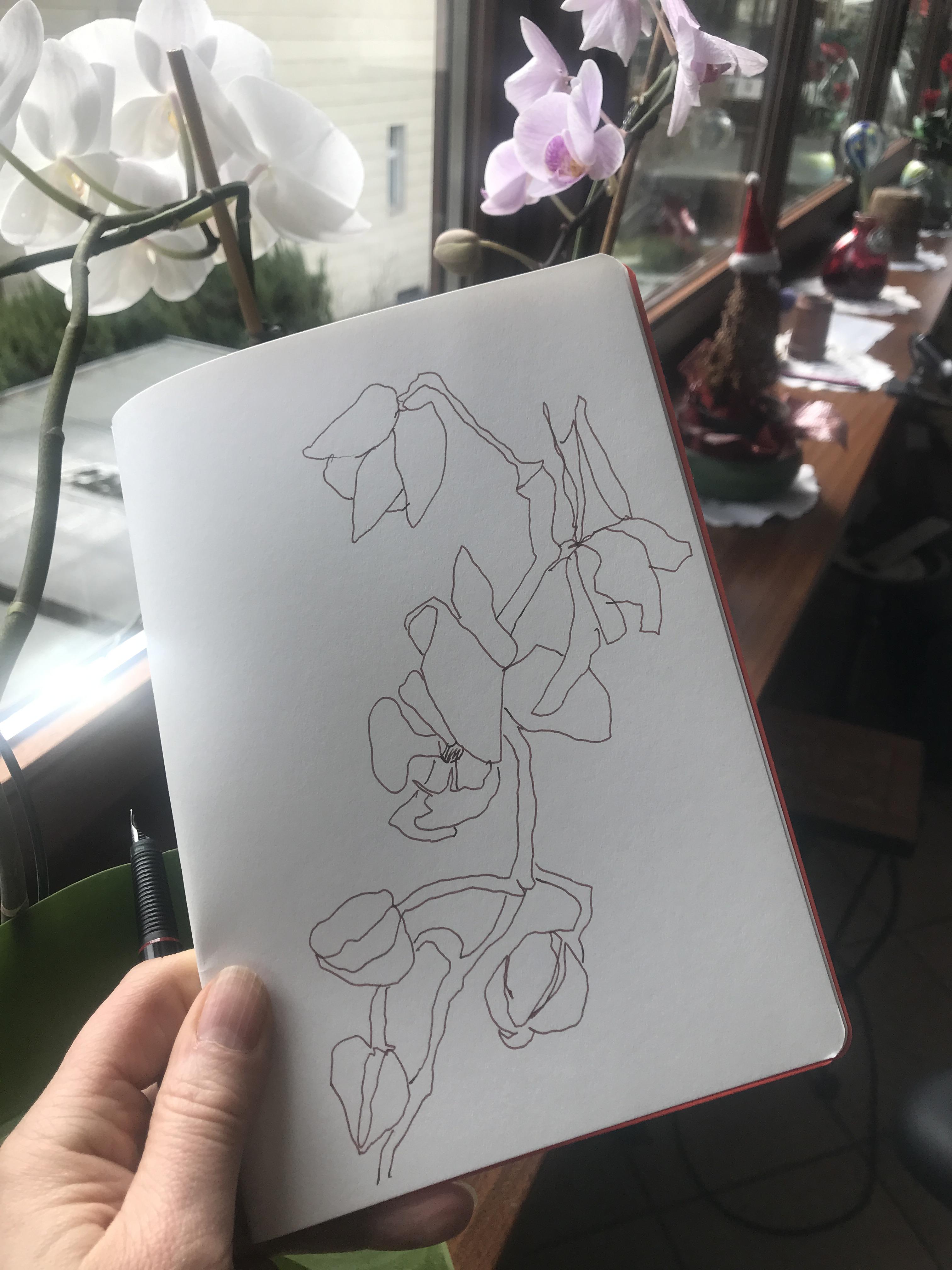 Mamas Orchideen Und Gerdas Olivenbaume Zeichnungen Von