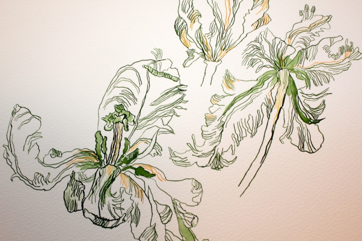 Entstehung Papageientulpen, Zeichnung von Susanne Haun, 52 x 52 cm (c) VG Bild-Kunst, Bonn 2019