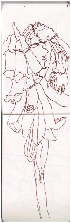 Toskana Skizzenbuch, Villa Baldini, Zeichnung von Susanne Haun (c) VG Bild-Kunst, Bonn 2019