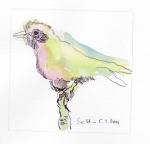 1 Farbenfroher Vogel, Version 1, 12 x 12 cm, Tusche auf Hahnemühle Aquarellkarton, Zeichnung von Susanne Haun (c) VG Bild-Kunst, Bonn 2019