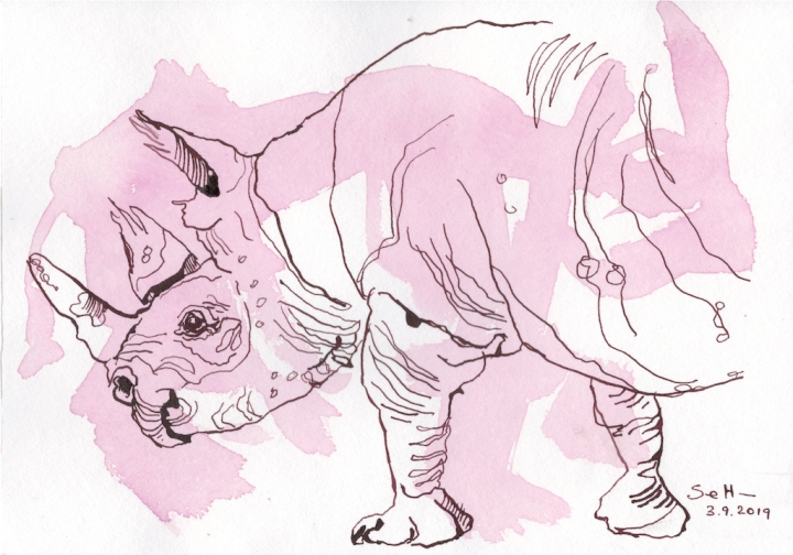 Entstehung Nashorn, Zeichnung von Susanne Haun (c) VG Bild-Kunst, Bonn 2019