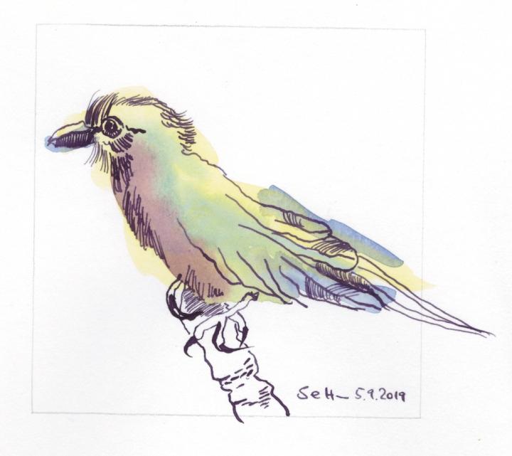 Farbenfroher Vogel, Version 3, 12 x 12 cm, Tusche auf Hahnemühle Aquarellkarton, Zeichnung von Susanne Haun (c) VG Bild-Kunst, Bonn 2019