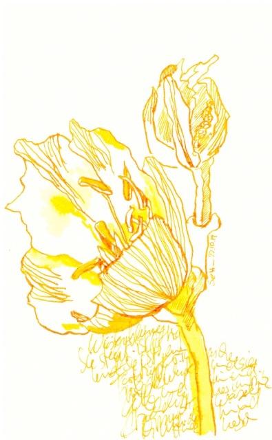Wüstenblume, 18 x 11 cm, Tusche auf Aquarellkarton, Zeichnung von Susanne Haun (c) VG Bild-Kunst, Bonn 2019