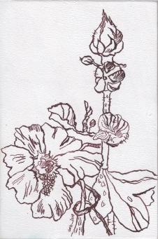 Stockrose auf Zigarrenkiste, Zeichnung von Susanne Haun (c) VG Bild-Kunst, Bonn 2019Stockrose auf Zigarrenkiste, Zeichnung von Susanne Haun (c) VG Bild-Kunst, Bonn 2019