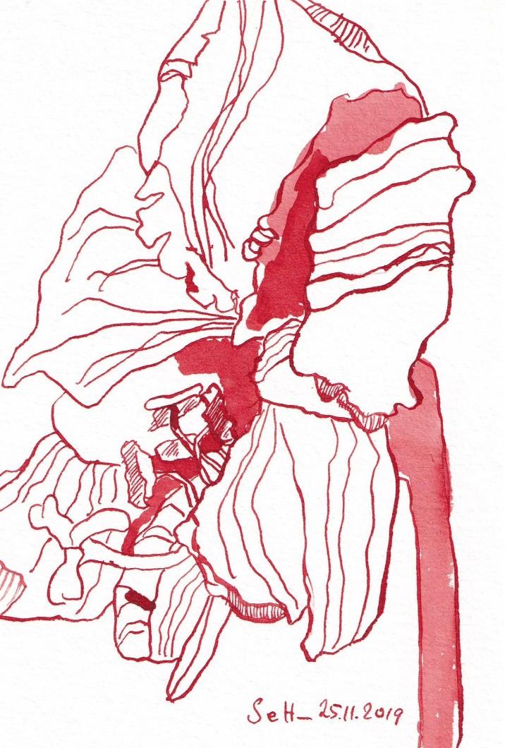 Weihnachts-Amaryllis, 13 x 18 cm, Tusche auf Aquarellkarton, Zeichnung von Susanne Haun (c) VG Bild-Kunst, Bonn 2019