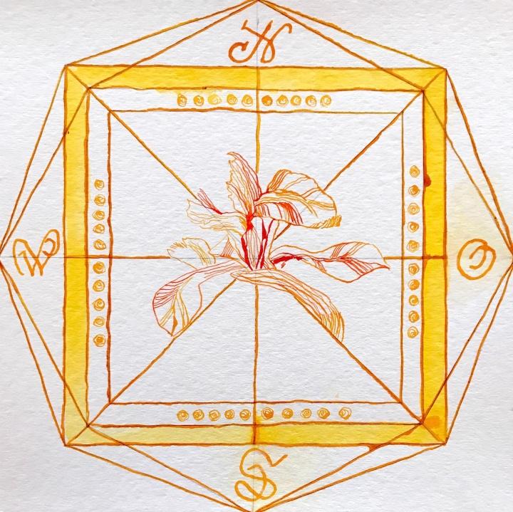 Windrose gelb – Schwertlilie – Zeichnung von Susanne Haun – 25 x 25 cm – Tusche auf Bütten (c) VG Bild-Kunst, Bonn 2020