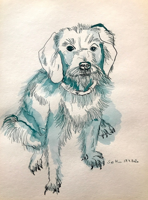 Das Hundeleben des Qamil Pulloverchen, für den Eichhörnchenverlag, 40 x 30 cm, Tusche auf Aquarellkarton (c) Zeichnung von Susanne Haun
