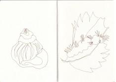 Blüten in der Prignitz, Zeichnung von Susanne Haun (c) VG Bild-Kunst, Bonn 2020