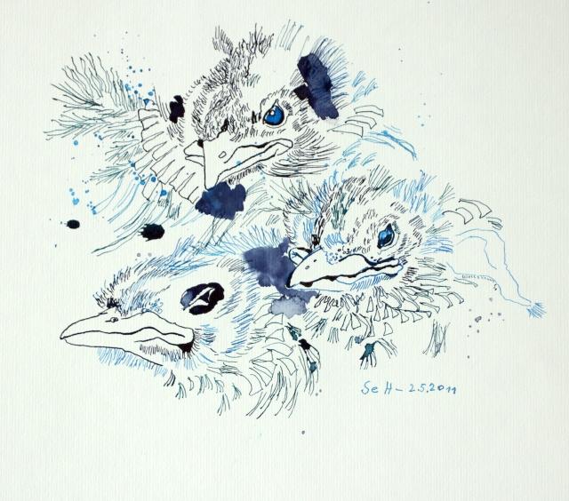 Drei Amseln im Nest, 25 x 30 cm, Tusche auf Aquarellkarton (c) Zeichnung von Susanne Haun