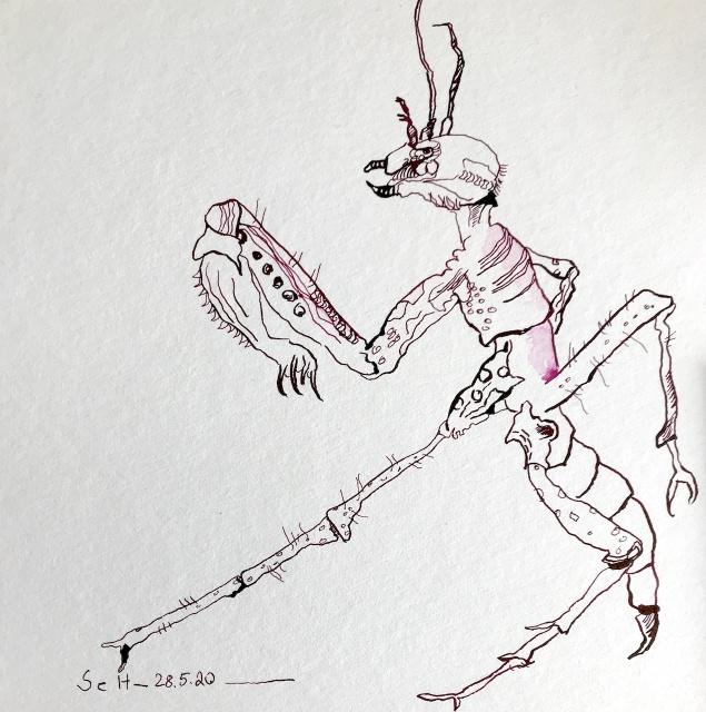 Gottesanbeterin, 25 x 25 cm, Tusche auf Aquarellkarton, Zeichnung von Susanne Haun (c) VG Bild-Kunst, Bonn 2020