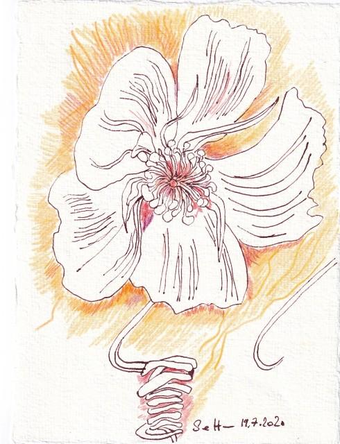 Tagebucheintrag 19.7.2020, Gerankel, 20 x 15 cm, Tinte und Buntstift auf Silberburg Büttenpapier, Zeichnung von Susanne Haun (c) VG Bild-Kunst, Bonn 2020